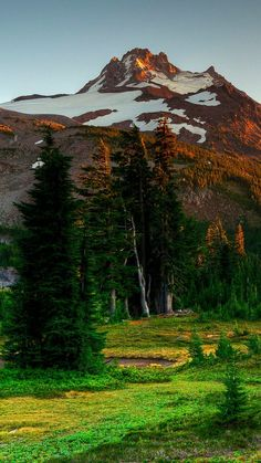 mountains, trees, eating, nature, landscape