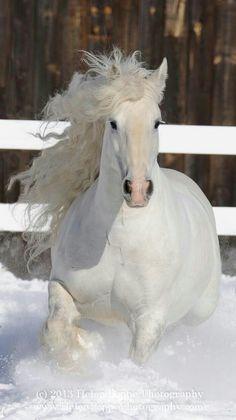 Beyaz güzellik❤