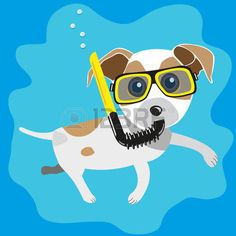 jack russell: funny character  jack russell terrier snorkel dive