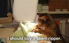 cat humor | Cat Humor