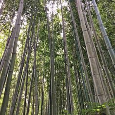 Bamboo has a bad reputation for spreading beyond its borders. Use these handy tips to contain bamboo and create a serene backdrop for your garden.