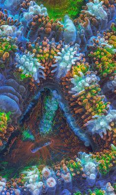 https://www.behance.net/gallery/11561351/Fantastic-world-of-fluorescent-corals