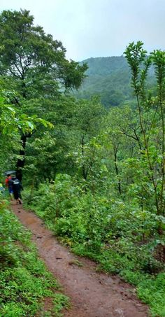 The Shivling experience - monsoon trekking to the waterfalls in Goa, India. Monsoon trekking is a chance to see another side of Goa that you can only see during the rainy season! Goa Tourism leads treks every week during monsoon season.