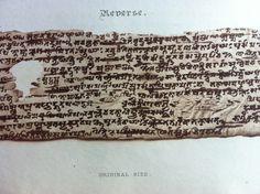 Close-up on the Reverse side of the leaf, Part 1 leaf 5 Plate V manuscript