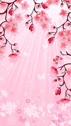 Cherry Blossoms Wallpaper Phone Blossom Wallpapers And
