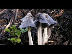 Coast To Coast AM - April 18, 2015  ADHD & Mushrooms