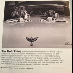 Cool car and cool dogs I would need 7 little holes for my chi-crew