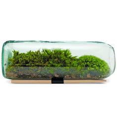 Moss Terrarium Bottle Kit   Crafting & DIY   bambeco   Scoutmob Shoppe