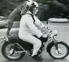 vintage everyday: Vintage Humorous Photos