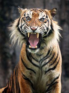 Scream..!! by Syahrul Ramadan on 500px