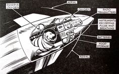 The Sad Story of Laika, The First Dog In Space | David Reneke | Space and Astronomy News