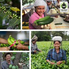Happy St. Patrick's Day! We hope you celebrate with environmentally & socially sustainable #FairTrade coffee, produce, cocoa, tea or more! #StPatricksDay