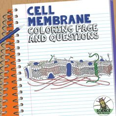 Photosynthesis diagrams and study guide pinterest high school use this coloring page to help students visualize the different parts of the cell membrane in fandeluxe Choice Image