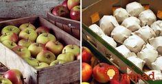 Jablká môžu vydržať v perfektnom stave celé mesiace. Ak si aj vy chcete v zime pochutnať na vynikajúcich chrumkavých a šťavnatých jablkách, prinášame vám niekoľko tipov, ako na to! Apple, Fruit, Food, Apple Fruit, Essen, Meals, Yemek, Apples, Eten