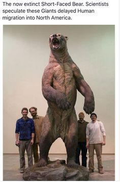 The now extinct Short-Faced Bear. Scientists speculate these Giants delayed Human migration into North America. Short Faced Bear, Vida Animal, Spinosaurus, Dinosaur Art, Extinct Animals, Prehistoric Creatures, T Rex, Geology, Aliens