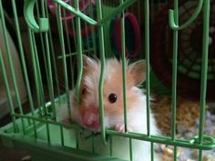 Hammy wants out Rodents, Hamsters, Hamster Treats, Gerbil, Illustrations, Pets, Friends, Animals, Amor