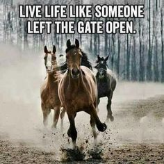 Living life - Horses Funny - Funny Horse Meme - - Living life The post Living life appeared first on Gag Dad. Good Quotes, Life Quotes, Quotes Quotes, Nature Quotes, Motivational Quotes, Inspirational Horse Quotes, Cowboy Quotes, Horse Sayings, Cowgirl Quote