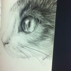 #desenho #draw #cat #grafite #sketch #sketchbook