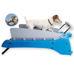 1000 Images About My Pet Dreamboard On Pinterest Dog