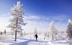Best Places to Spend Christmas: Lapland
