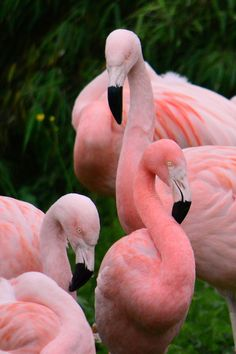 My hand-out pin is a flamingo cottage. Pretty Birds, Beautiful Birds, Animals Beautiful, Pretty In Pink, Cute Animals, Small Animals, Flamingo Pictures, Pink Bird, Mundo Animal
