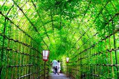 """【風景】東京 向島百花園  「下町發光的綠色隧道」 「向島百花園」是從江戶的町人文化所開花結果的文化.文政期 (1804 ~1830 年紀)中所建造的庭園,因是以花草鑑賞為中心、而被受人們喜愛的""""民營的花園""""。 最適合來訪的季節是早春的梅和秋天的萩,以竹子製成的柵欄隧道長30 m 「萩的隧道」是百花園的名產。 到 9 月萩草將會開花,繼續豐富著庶民文人所深愛的庭園,是色彩豔麗的秋季。  SAKURAvillage 編輯局 http://sakuravillage.jp/chinese/     【風景】東京 向島百花園  「下町に光る緑のトンネル」 「向島百花園」は、江戸の町人文化が花開いた文化・文政期(1804~1830年頃)に造られた庭園で、花の咲く草花鑑賞を中心とした""""民営の花園""""として親しまれています。 みどころは早春の梅と秋の萩で、竹の柵にそわせてトンネル状にした30mにわたる「萩のトンネル」は百花園の名物です。 9月になると萩が花をつけ、庶民的で文人趣味豊かな庭園が彩り豊かな秋色に染まっていきます。  SAKURAvillage ..."""