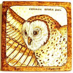 """6-2011, """"Common Barn Owl"""", profile, in flight"""