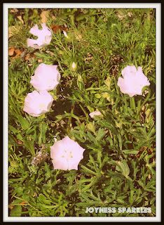 Little bitty white flowers (that look pink in this picture).
