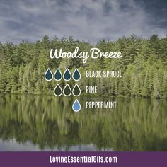 Black Spruce Essential Oil Recipes, Uses and Benefits - EO Spotlight Pine Essential Oil, Essential Oils Cleaning, Essential Oil Diffuser Blends, Laurus Nobilis, Feeling Under The Weather, Aromatherapy Oils, Carrier Oils, Massage Oil, Doterra
