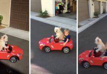 Filmre vette az anyuka, ahogy kisfia autóját vezeti a kutyájuk Marvel, Toys, Activity Toys, Clearance Toys, Gaming, Games, Toy, Beanie Boos