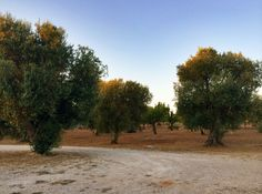 Home sweet home.  #OlioSalve #olive #olivetrees #nature #sky #oil #olio #extravergine #madeinItaly #Italy #nature