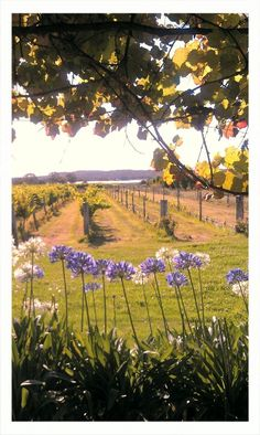 One of the wine yards in Stanthorpe