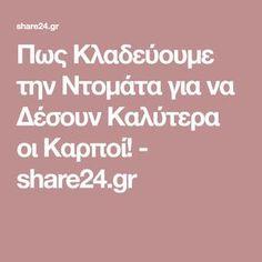 Πως Κλαδεύουμε την Ντομάτα για να Δέσουν Καλύτερα οι Καρποί! - share24.gr