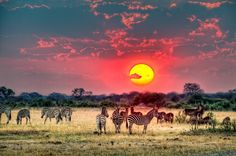 The breathtaking photography of Stephan Jaggy – Janet Carr @ Mother Nature, Amazing Photography, South Africa, Most Beautiful, Sunset, Landscape, Painting, Animals, Hdr