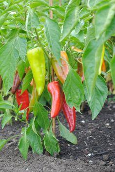 Season of Change -- Fall Gardening