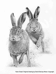 Large dead falls – About Hobby Sports Animal Drawings, Art Drawings, Lapin Art, Baby Animals, Cute Animals, North American Animals, Graphite Art, Bunny Painting, Rabbit Tattoos
