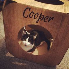 Oh my goodness  Cooper is so tiny and adorable!  thank you so much! We are so pleased he likes his pod  #cat #catsofinstagram #cats_of_instagram #catfurnature #catfurniture #catsinboxes #cattoy #INSTACAT_MEOWS #cutecat #PurrMachine #catsinboxes #catbox #Excellent_Cats #BestMeow #dailykittymail #thecatniptimes #catcube #catpod #ArchNemesis #FlyingArchNemesis #myindoorpaws #ififitsisits #cutecatcrew #catchalet #catnip #themeowdaily #kitty #dailykittymail #catgrass