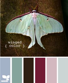Any color combo that uses a lunar moth for its palette has to be gorgeous!