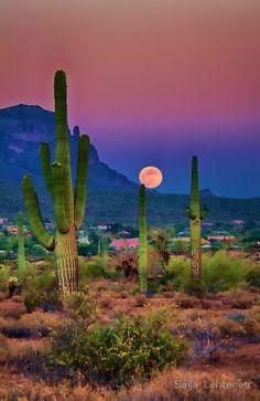 Cactus al amanecer