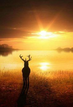 A deer watching the beautiful sunrise. Beautiful World, Animals Beautiful, Stunningly Beautiful, Beautiful Models, Beautiful Pictures, Beautiful Sunrise, Amazing Nature, Belle Photo, Nature Photography