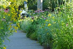 Wild flowers are great! What a Beautiful street sidewalk!
