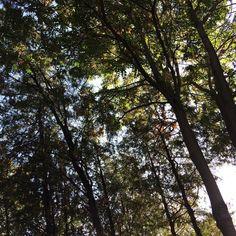 #tree #forest #nature #serenity #agac #orman #doga #huzur
