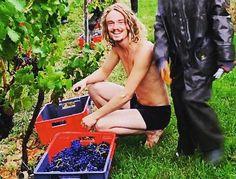 Henri Sandifer, vendange sous la pluie en maillot de bain, La Tourbeille Vineyard @latourbeillevineyard