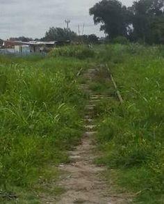 LOS PRINCIPIOS: El ramal troncal del Urquiza sufre el abandono