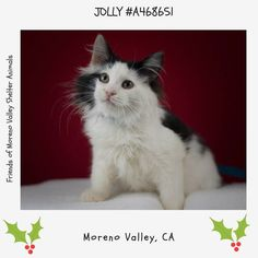 AT RISK IF NOT ADOPTED OR RESCUED BY END OF DAY NOV 30th   Came in with A468649 650 653 654 655  JOLLY #A468651 (Moreno Valley CA) male black and white Domestic Mediumhair. The shelter thinks I am about 13 weeks old. I have been at the shelter since Nov 19 2016 and I may be available for adoption on Nov 30 2016 at 11:00AM.  http://ift.tt/2gBvrlq  Moreno Valley Animal Shelter at (951) 413-3790 Ask for information about animal ID number A468651  #adoptdontshop #savealifeadopt #sheltercats…