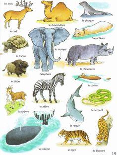 Les animaux; la chèvre 山羊; le requin鯊魚;le phoque海豹; le castor海狸