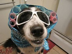 collection of Halloween Costumes for dogs and cats Costume Chien Halloween, Best Dog Halloween Costumes, Halloween Eyes, Costumes For Dogs, Animal Costumes, Weird Costumes, Cool Pets, Cute Dogs, Fantasias Halloween