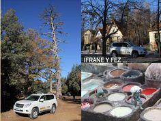 Ruta Gargantas y Dunas, los bosques de cedros de Ifrane y los curtidores de piel en Fez