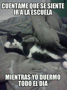 Se siente mal!!!! #catlover