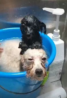 puppies and babies videos together / puppies and babies ; puppies and babies together ; puppies and babies videos ; puppies and babies pictures ; puppies and babies videos together Cute Funny Animals, Cute Baby Animals, Funny Dogs, Animals And Pets, Fun Funny, Wild Animals, Cute Puppies, Cute Dogs, Dogs And Puppies